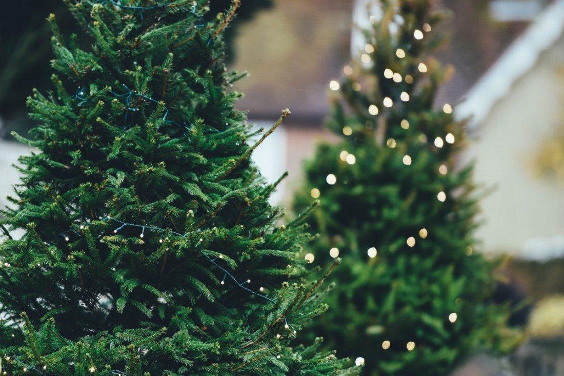 Moderne Kunstig eller ekte juletre? | Bergensmagasinet.no BY-07